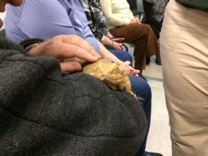 Photo d'un animal exotique se faisant toucher le dos par quelqu'un.