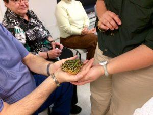 Photo d'une grosse grenouille dans la main d'un participant.